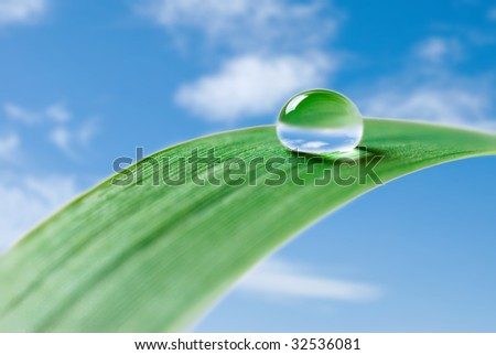 water drop on a grass - stock photo
