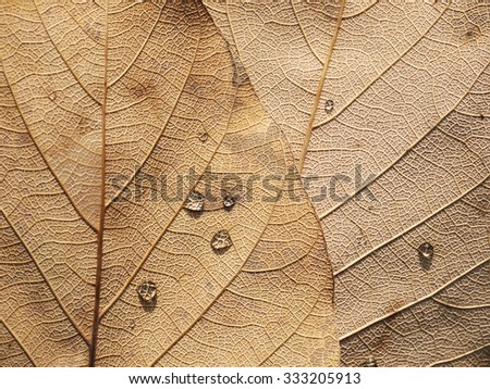 water drop on dry brown leaf in fall season - stock photo
