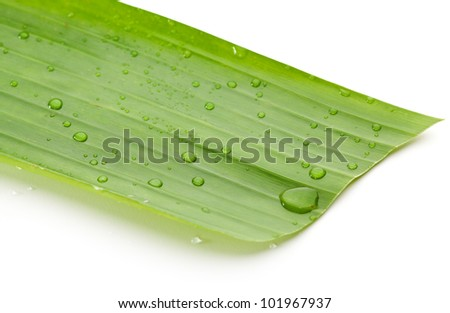 Water Drop on Green Banana Leaf - stock photo