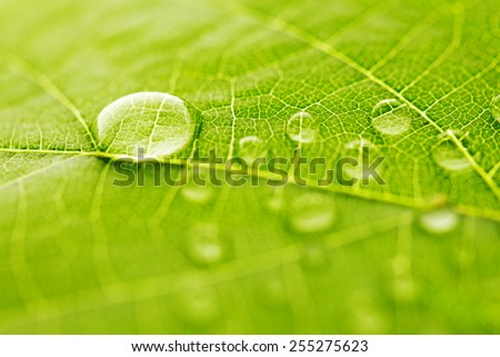 Water drop on green leaf macro - stock photo