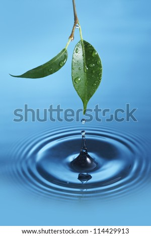 Water droplet falling from a green leaf is creating circles - stock photo
