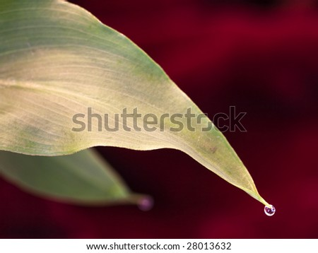 Water Droplet Macro Leaf End Against Velvet - stock photo