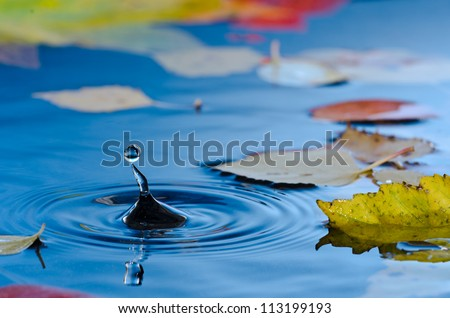 Water droplet making ripples in pond with autumn leaves - stock photo