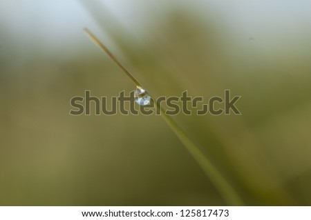 Water droplet on blade of grass reflecting meadow behind it - stock photo