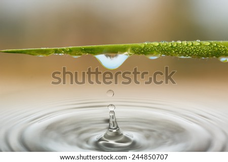 Water droplets from leaves of Grass nature background - stock photo