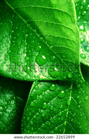 water droplets on  green leaves - stock photo