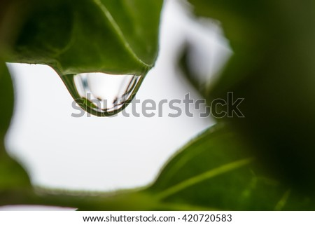 Water droplets on leaves after rain. - stock photo
