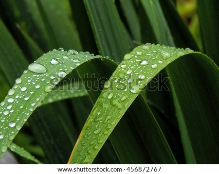 Water droplets on the leaves of a plant close up - stock photo