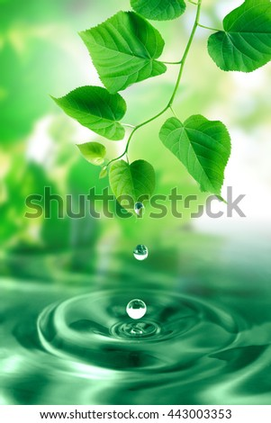 Water drops falling from freshness green leaves. Nature background - stock photo