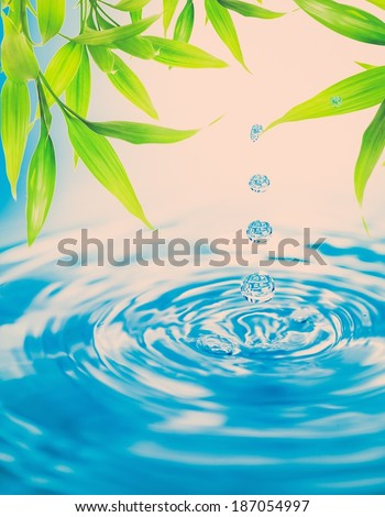 Water drops folling from a bamboo leaf - stock photo