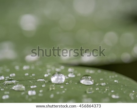 Water drops in summer on plants after rain - stock photo