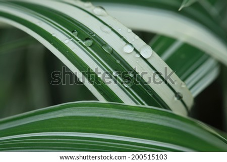 Water drops on a green leaf macro - stock photo