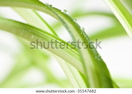Water drops on a plant in front of a white background - stock photo