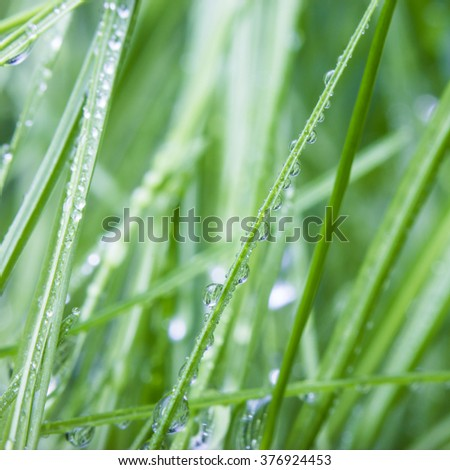 Water drops on grass. Shallow deep of field. - stock photo