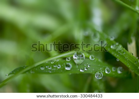 Water drops on green grass - stock photo