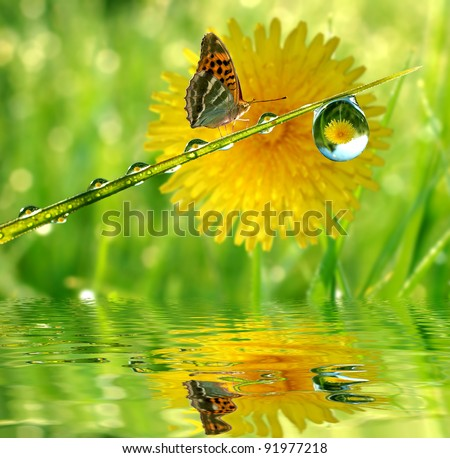 water drops on green grass with butterfly - stock photo