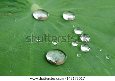 water drops on green leaf - stock photo