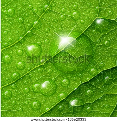 Water drops on green leaf macro background. Raster version. - stock photo