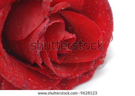 Water_drops on Red Rose - stock photo