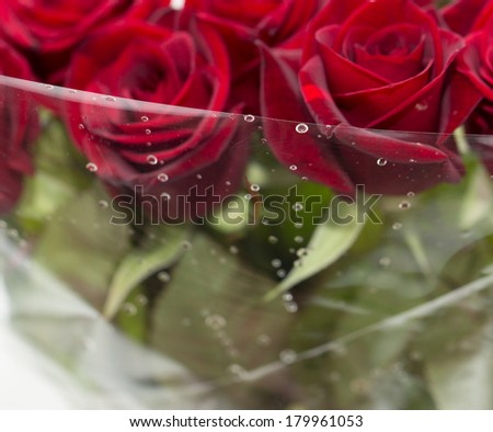 water drops on roses. macro - stock photo