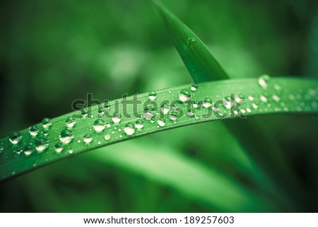 Water drops on the cyan grass. Macro shoot - stock photo