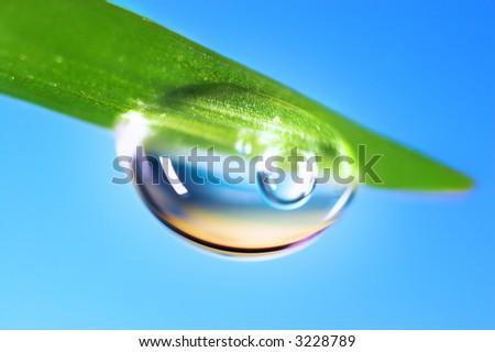 Water drops on the fresh green shoot. Super Macro - stock photo