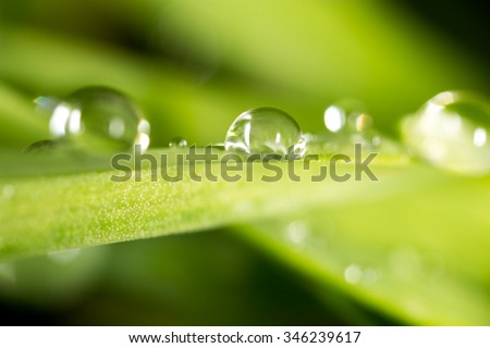 Water drops on the fresh green shoot. Super Macro - stock photo