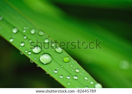 Water drops on the grass - stock photo