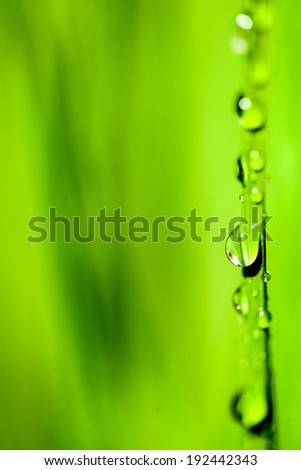 Water drops on the green grass background - stock photo
