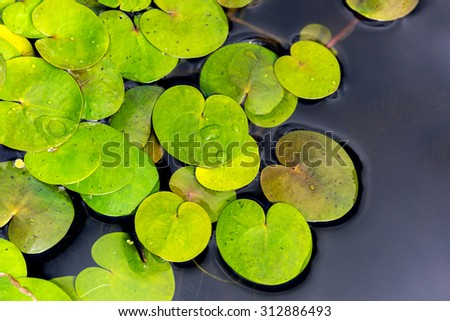 water flora abstract natural background - stock photo