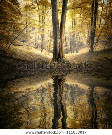 water in forest autumn landscape - stock photo
