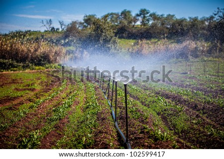 water irrigation of potato field on sunny day - stock photo