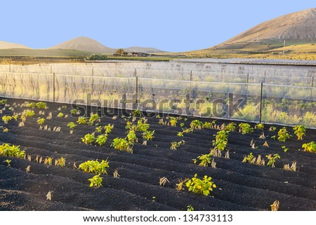 water irrigation system on a field with lapili earth - stock photo