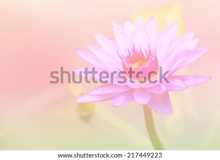 water lilly,lotus flower on pastel tones - stock photo