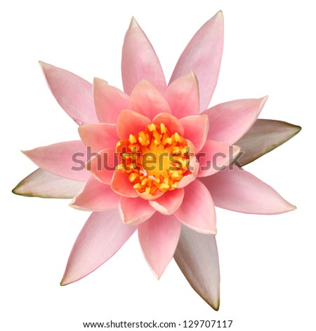 Water lilly on white background - stock photo