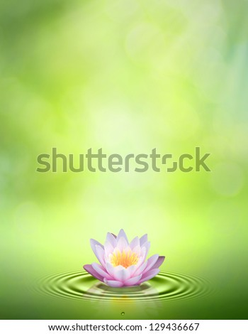 Water lily. Abstract oriental backgrounds for your design - stock photo
