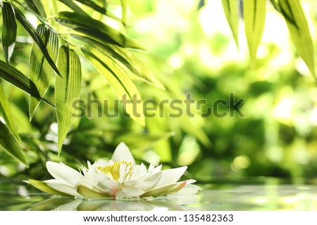 water lily float on water in nature. - stock photo
