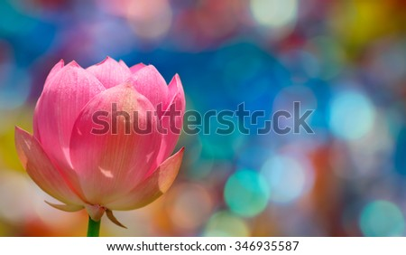 Water lily flower in the lake panoramic view - stock photo