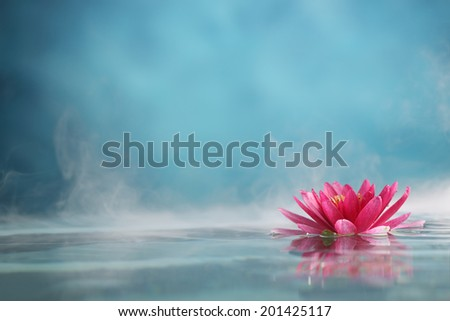 Water lily flowers blooming in water - stock photo