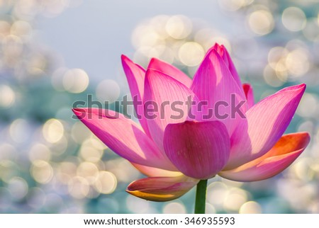 Water lily over bright colorful background - stock photo
