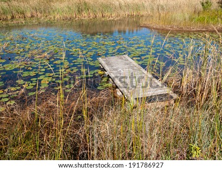 Water lily plants floating in pond - stock photo