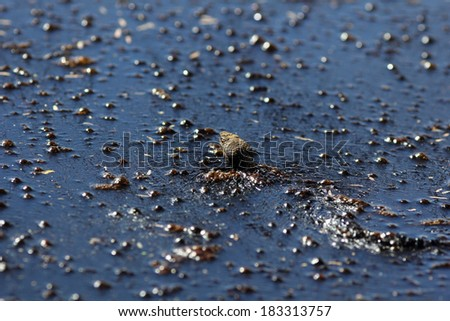 Water moccasin  - stock photo