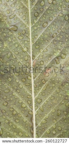 water rain drop on leaf texture - stock photo