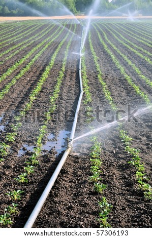 Water sprinkler on an agriculture field - stock photo