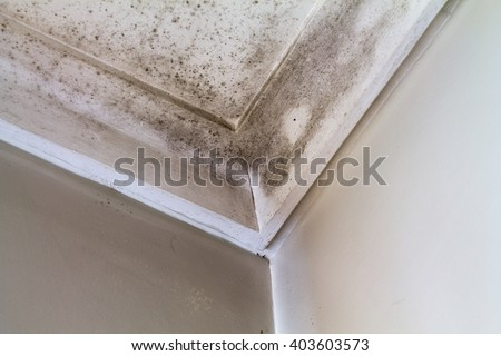 Water stains on the roof of a house. - stock photo