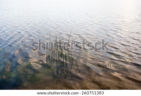 Water surface near the bank with visible water plants and young reed stems. - stock photo