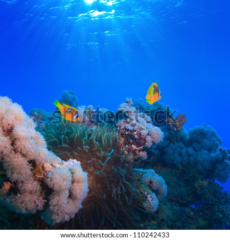 Water surface with sunrays underwater coral garden with anemone and a pair of yellow clownfish - stock photo