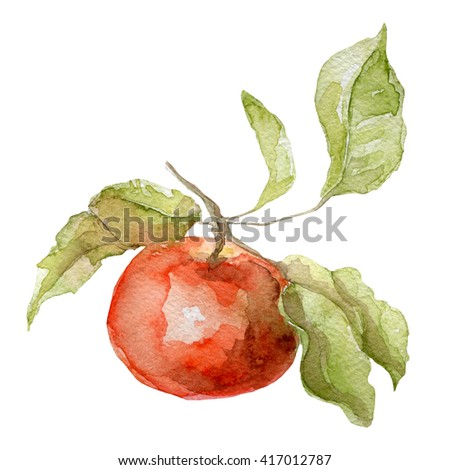 watercolor apple on a white background - stock photo