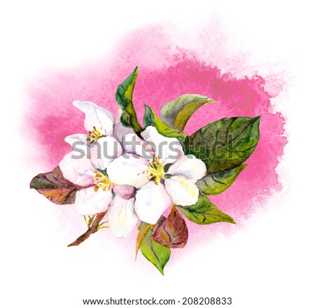 Watercolor apple or cherry (sakura) flower on watercolor artistic spot background - stock photo