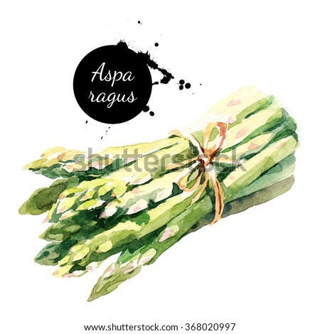 Watercolor asparagus. Isolated eco food illustration on white background - stock photo